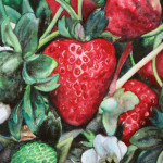 Heather Torres Art | Florida Strawberry | watercolor painting of strawberry and leaves