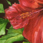 Heather Torres Art |Red Hibiscus |watercolor painting of red hibiscus flower