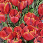 Heather Torres Art | Red Spring | tulip painting, red tulips, tulip watercolor painting
